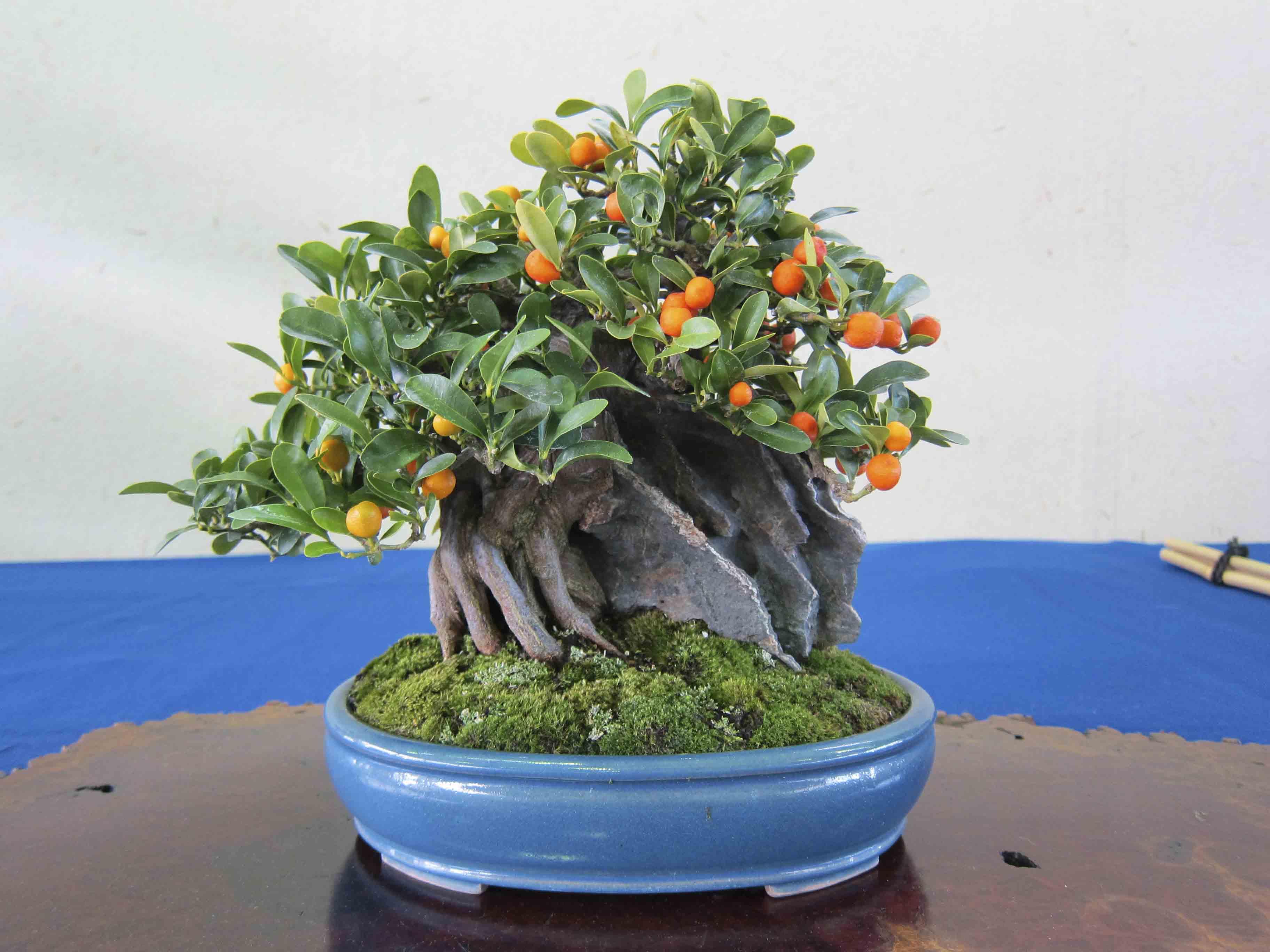 nd meifuten bonsai show  peter tea bonsai, Beautiful flower